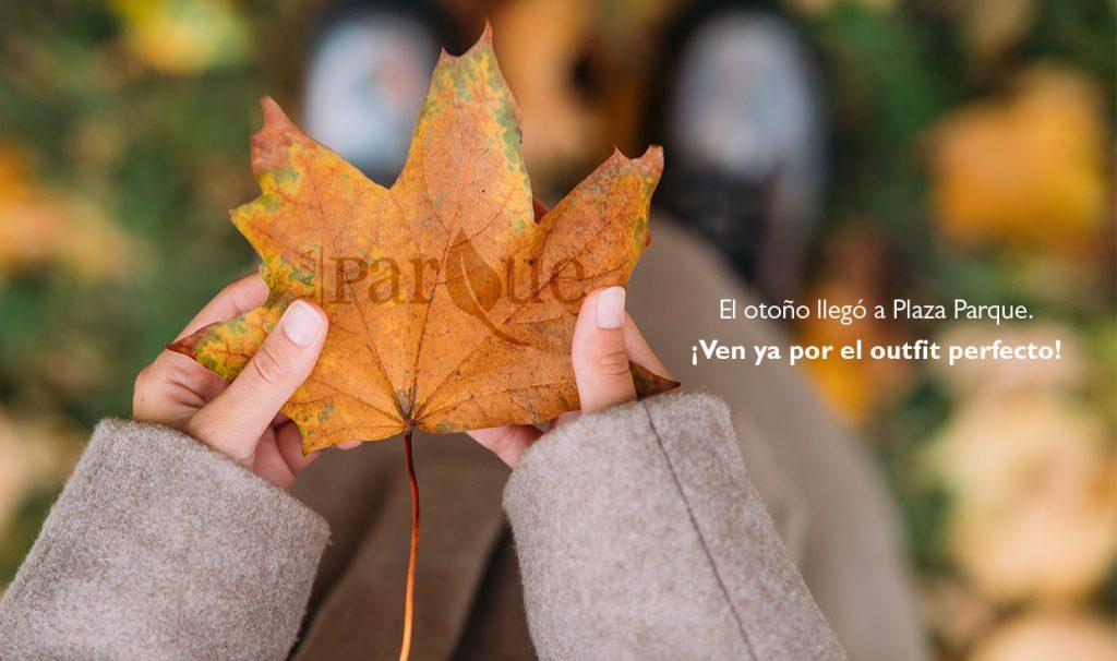 plaza parque | otoño